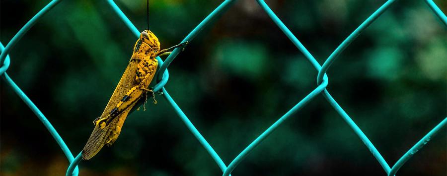 prevention sharp shop pest control miami florida
